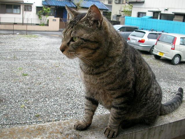 うちの猫〜1匹目