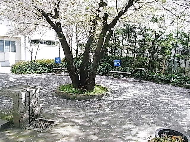 今年も桜の季節が終わった。