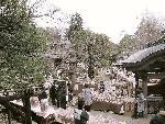 深大寺のだるま市