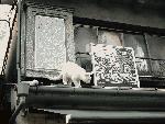 谷中銀座商店街のネコのオブジェ